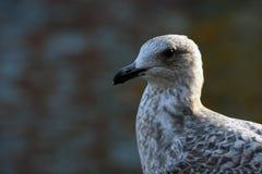 Птица берегом реки Стоковое Изображение