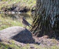 Птица Брайна стоковые изображения
