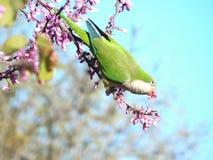 Птица весеннего времени Стоковые Изображения RF