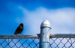 Птица весны Стоковые Изображения