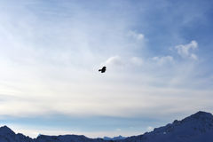 Птица витает в небе между пейзажем горы Галка летает в горы Стоковые Изображения
