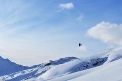Птица витает в небе между пейзажем горы Галка летает в горы Стоковые Фотографии RF