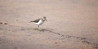 Птица воробьинообразного Стоковое Изображение RF