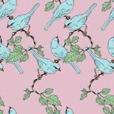 Птица воробья на ветви лозы иллюстрация вектора