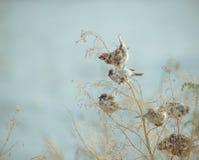 Птица воробья сидя на старой ручке Замороженная зима Po птицы воробья Стоковое фото RF