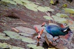 Птица воды на лист Стоковое фото RF