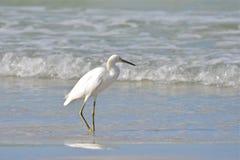 Птица в воде Стоковые Изображения