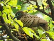Птица в гнезде ` s птицы Стоковая Фотография RF