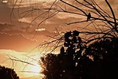 Птица в дереве на восходе солнца Стоковая Фотография RF