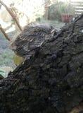 Птица в дереве Canelones, Уругвай Стоковые Фотографии RF