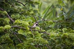 Птица в дереве стоковое изображение rf