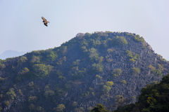 Птица в заливе Halong Стоковые Фото