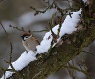 Птица в зиме Стоковая Фотография