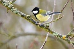 Птица в зиме Стоковое Изображение