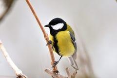 Птица в зиме Стоковое Изображение RF