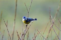 Птица в зиме Стоковые Фотографии RF