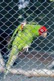 Птица в зоопарке смотря через ячеистую сеть стоковая фотография rf
