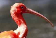 Птица в зоопарке соотечественника Малайзии Стоковое Фото