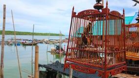 Птица в клетке в деревне Ko Panyi мусульманской, Таиланде сток-видео