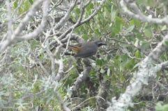 Птица в кусте Стоковое Изображение RF