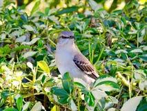 Птица в кусте стоковая фотография