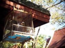 Птица в клетке как домой любимчик и декоративный элемент Стоковая Фотография RF