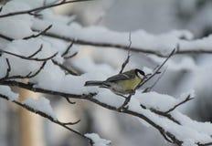 Птица в лесе с белым снегом Стоковое Изображение