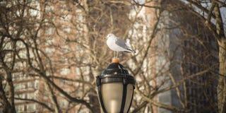 Птица в мире Стоковое Фото
