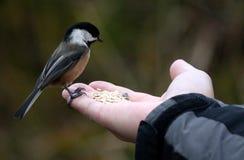 Птица в наличии Стоковое Фото