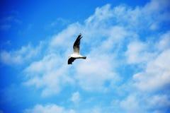 Птица в небе Стоковое Изображение RF