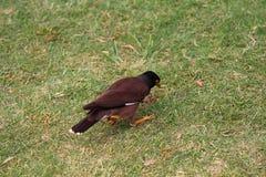 Птица в парке стоковая фотография rf