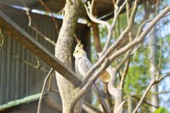 Птица в питомнике стоковые изображения