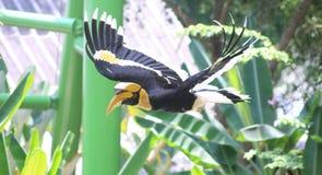 Птица в полете стоковое изображение