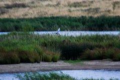 Птица в полете Стоковые Фото