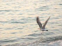 Птица в полете Стоковая Фотография RF