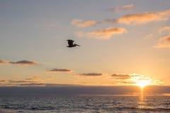 Птица в полете Стоковое Изображение RF