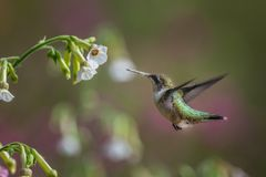 Птица в природе стоковые изображения rf