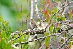 Птица в природе Стоковая Фотография RF