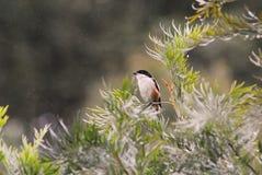 Птица в природе Стоковые Фотографии RF
