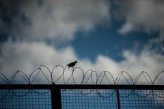 птица в проводе Стоковое Изображение