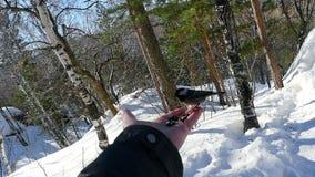Птица в руке ` s человека ест семена акции видеоматериалы
