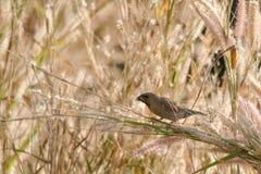 Птица в саде Стоковые Фото