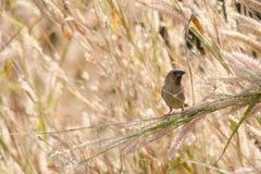 Птица в саде Стоковые Фотографии RF