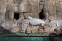 Птица в Сан-Диего Стоковые Изображения