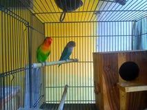 Птица влюбленности Стоковое фото RF