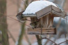 Птица в birdhouse Стоковое Изображение RF