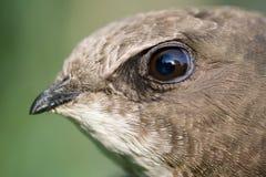 птица головной s Стоковое Изображение RF