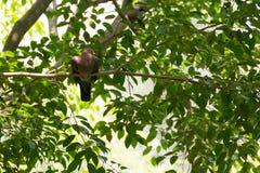 Птица голубя и отдыхать на дереве Стоковая Фотография