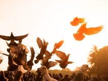 птица голубя на парке города Стоковые Фотографии RF
