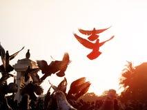 птица голубя на парке города Стоковые Изображения